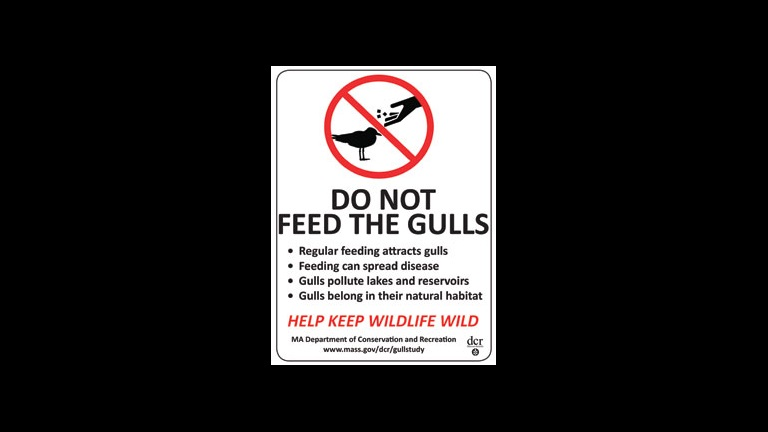 sign that says do not feed the gulls