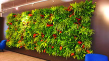 biophilic design living wall