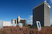 Pacific Plaza green roof
